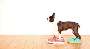 愛犬の足腰を守る!家の中でもすべりにくい床材ベスト3