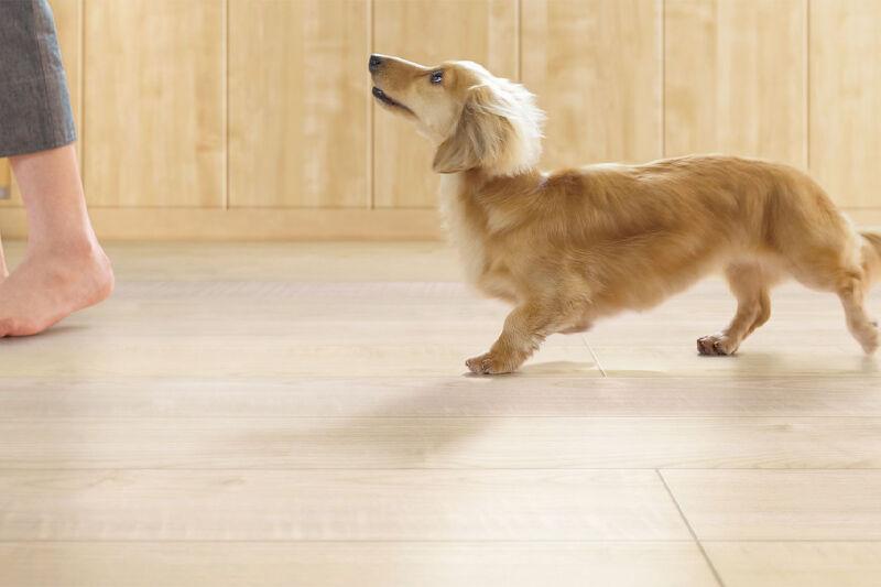 室内を歩く小型犬のイメージ