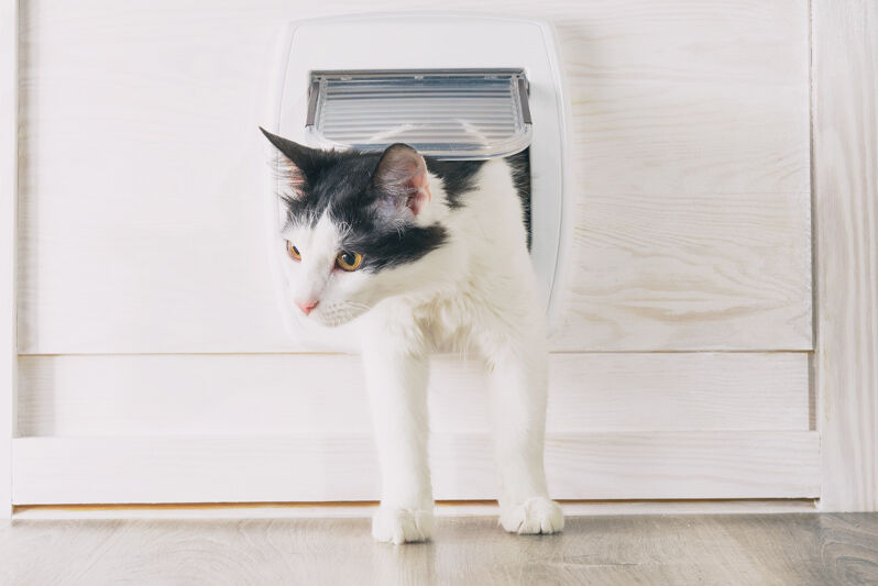 室内猫用ドアのイメージ